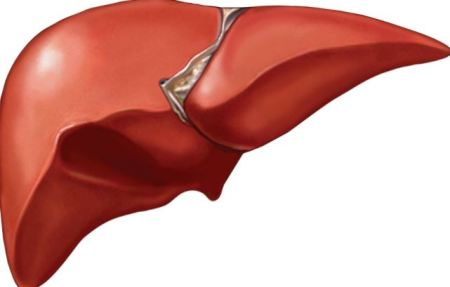 Habits That Can Damage Your Liver… No 5 Will Shock You