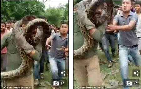 Man Almost Strangled To Death By Massive Python  While Taking Selfie With It