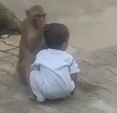 Monkey Kidnaps 2-year-old Boy, Forces Him To Play With It (Photos+Video) 1