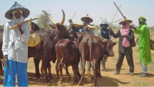 Open Grazing Not Banned In South-East, Our Governors Just Deceiving Us - Ndigbo Cries Out