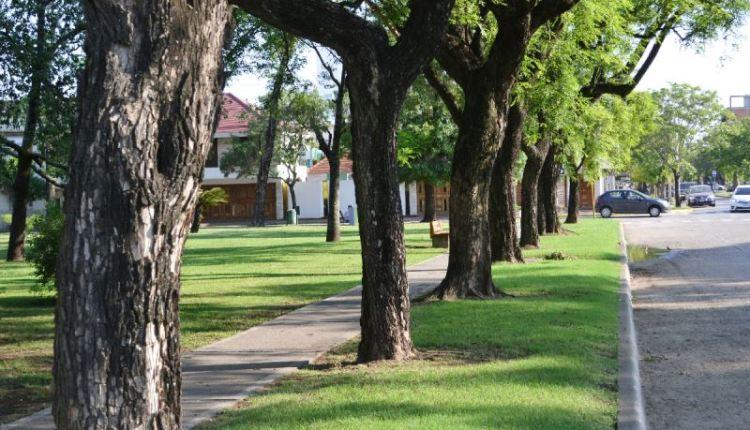 Tornquist – Hoy habrá una reunión de «Arbolado Público»