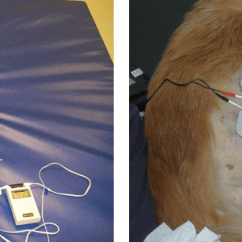 Wheel Chairs For Dogs What A Chair Electrical Stimulation | Toronto Dog Rehab
