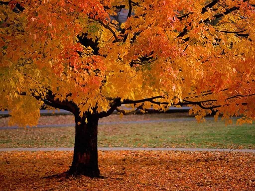 Image result for pictures of toronto in the fall