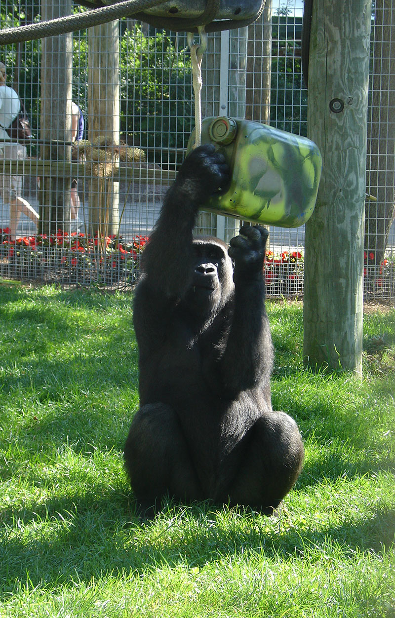 Toronto Zoo  Animal Enrichment