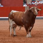 'Gandillito', de Galache, gana el Premio 'Toro de Oro' de la Feria de Salamanca