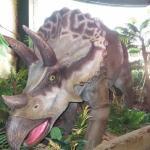 tallulah-triceratops