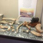 torquay-museum (3)