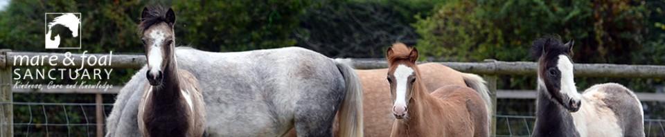 cropped-three-foals-close-plus-logo