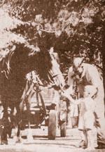 boy feeding barney horse nairns dairy