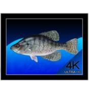 Aquarium 4k live wallpaper icon