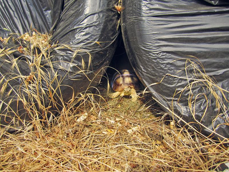 Mochi found his secret hideout!