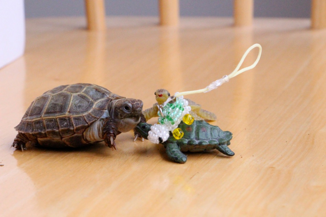 Does this mean we're friends now?  Happy World Turtle Day, everyone!