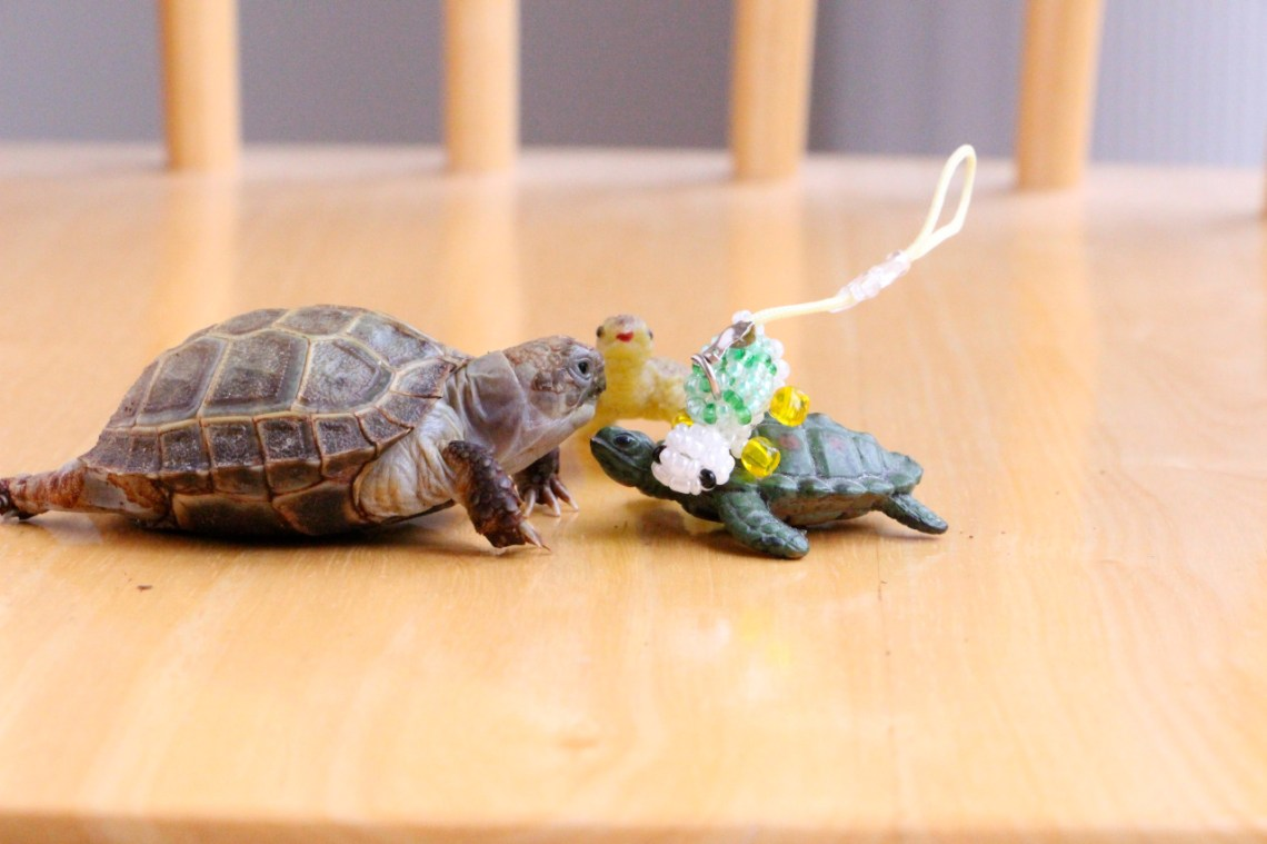 Phone charm turtle, I am not going to burp in your face this time!