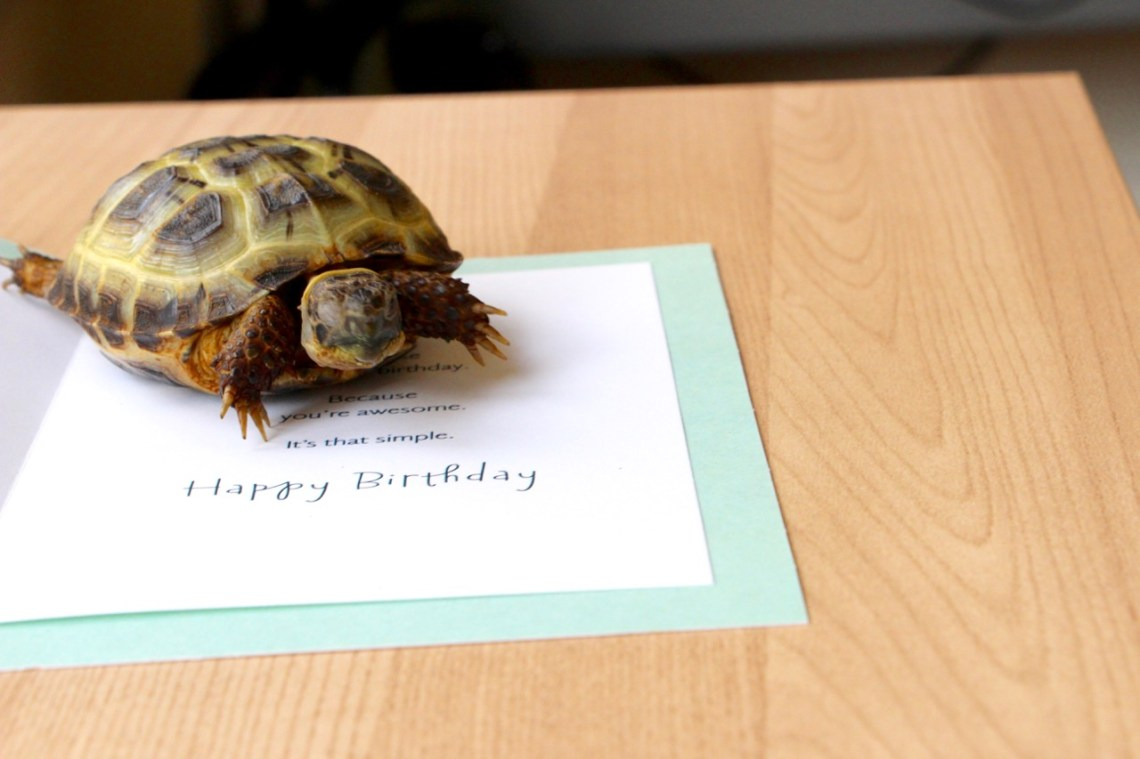 Wishing that Zoya gets lots of birthday noms!