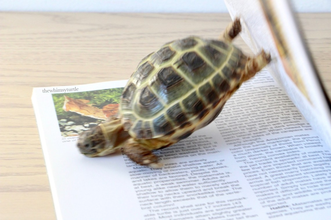 OOF!  Hey!  Don't turn the page yet!