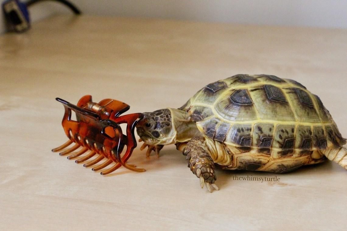 Mom, this better not be real tortoiseshell!