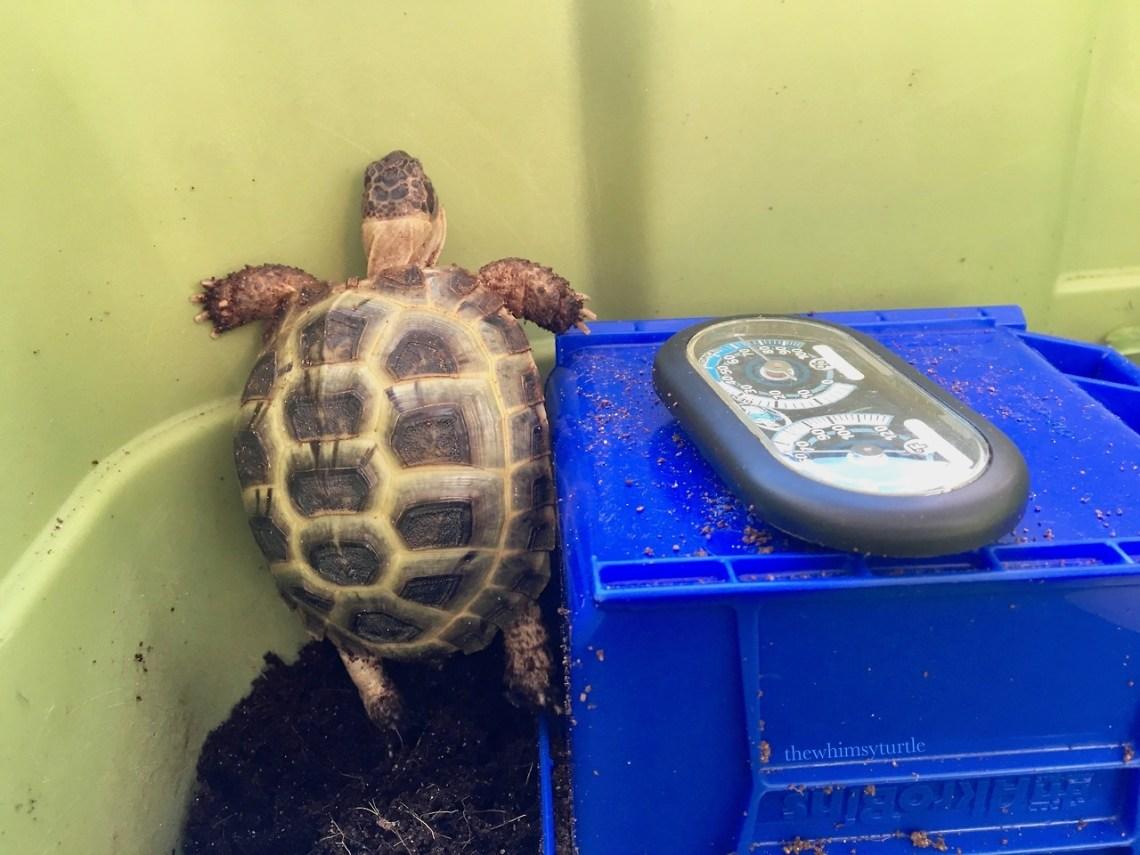 I am a ninja tortoise!