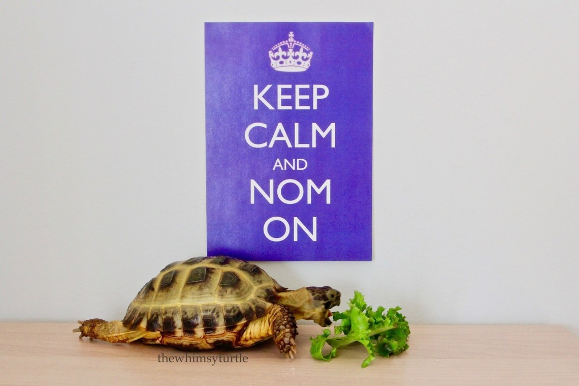 The ultimate tort motto!