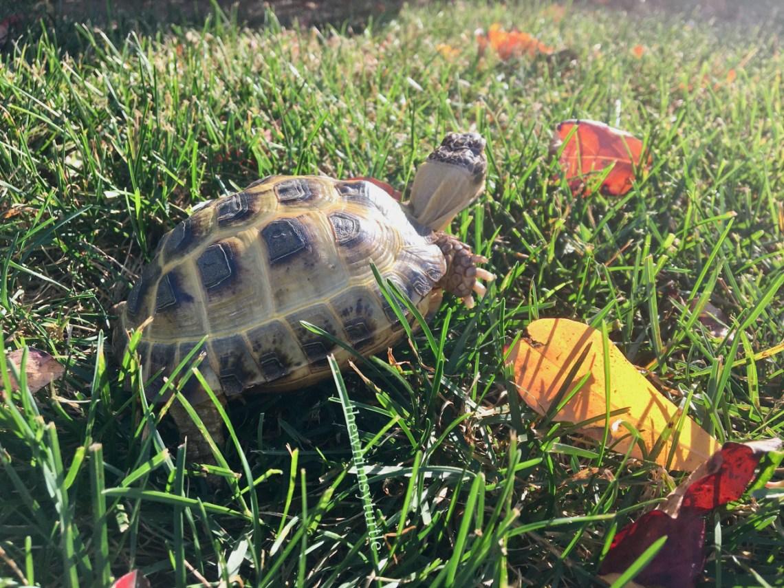 Plus gorgeous fall sunshine on my shell!