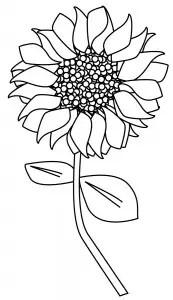 digitalcardmakingtuscany_sunflower