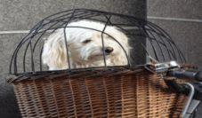 woven dog crate
