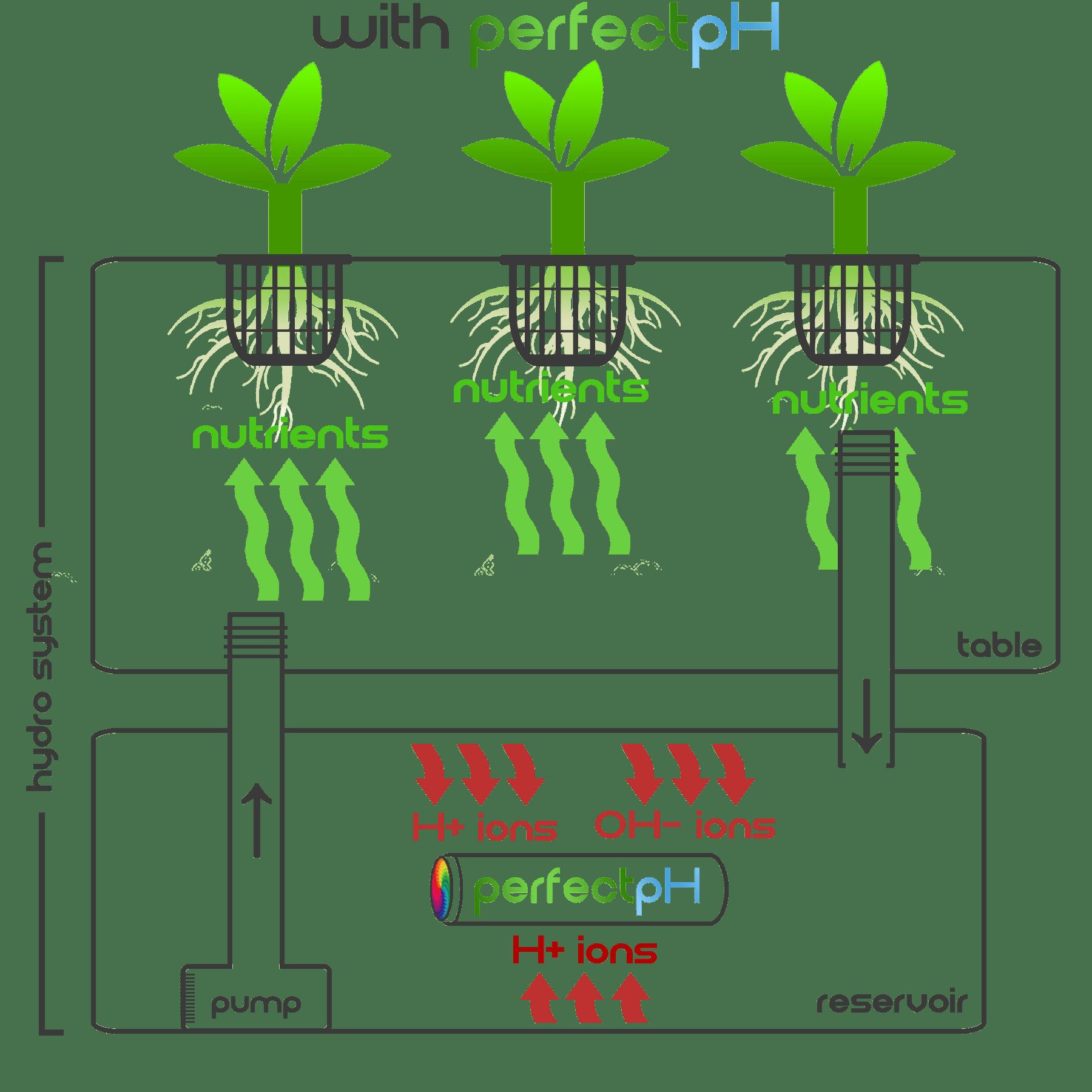 ion chart w pph