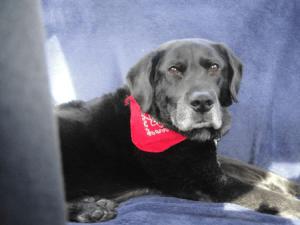 Jake dog back seat