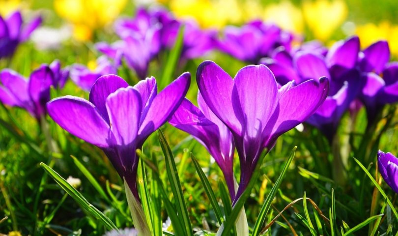 Primavera, poesia di Patrizia Valpiani