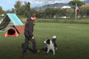 Luca Bartelloni e Greg, campioni italiani di Obedience