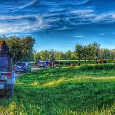 Bisons and Sunset Tour – Elk Island National Park