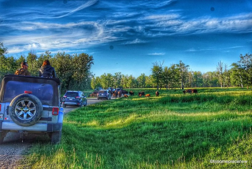 A quick guide to the Elk Island National Park - home to the American bisons, located just a few minutes away from Edmonton, the capital city of the Canadian province of Alberta. Get lost in the wilderness, camp out, bird watch, star gaze and so much more #canada #elknationalpark #travelalberta #exploreedmonton