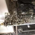 1 3 - Renovare garsoniera distrusa de porumbei - Inainte si Dupa