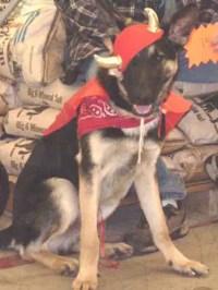 Dog Costumes - German Shepherd Costumes