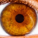 What Determines Eye Color?