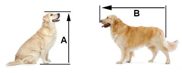Diagram of how to measure your Golden for the right size crate