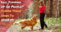 Train Your Golden Retriever to Stop Jumping Up on People