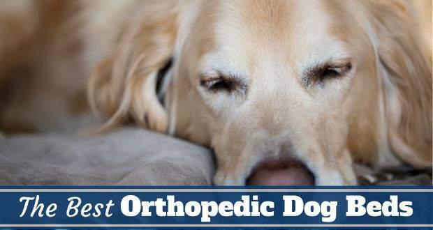 The Best Orthopedic Dog Beds in 2017  Perfect For Golden