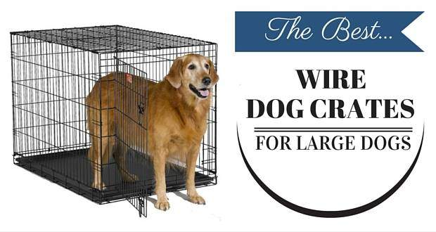 best wire dog crates for large dogs written beside a golden retriever in wire crate