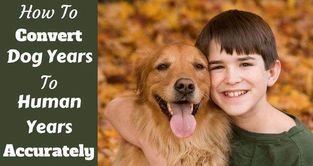 How to convert dog years to human years written beside a young boy hugging a golden retriever