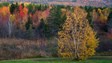 Photo of Muşchii şi copacii care te încurajează