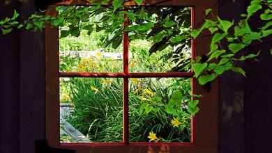 Photo of Patul de lângă fereastră…