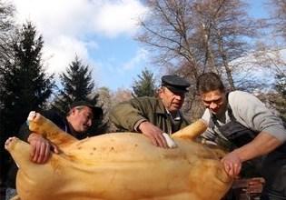 Photo of Români din Chicago au fost arestaţi pentru că au tăiat porcul