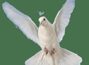 Photo of Puterea Duhului Sfânt ȋn fiecare creștin