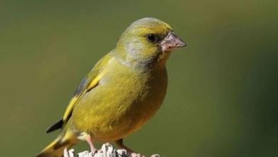 Photo of Pasărea cu aripa frântă