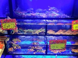 aquarium tanks