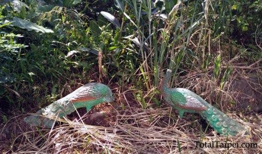 hemeishan peacocks