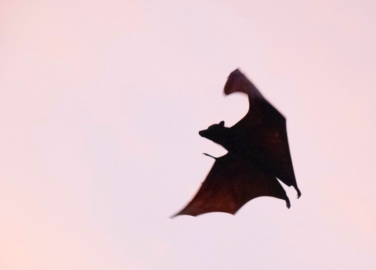 טוטם עטלף