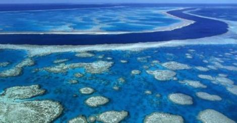 cual es_el_arrecife_de_coral_mas_grande_del_mundo