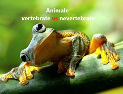animale vertebrate si nevertebrate