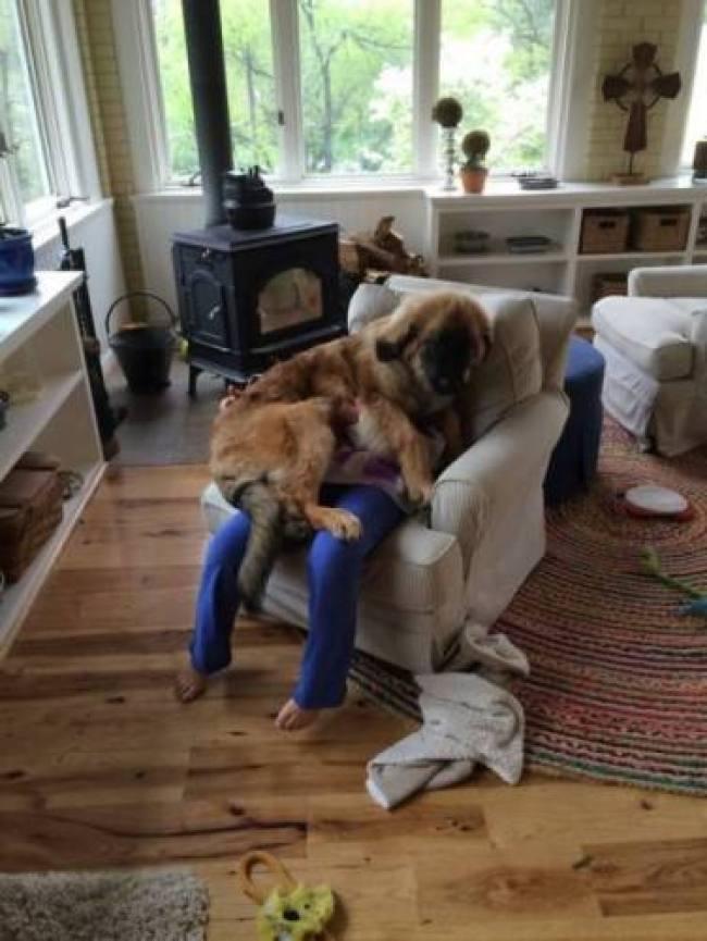 curs ensinistrador gossos